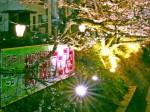 桜桜フェスタ